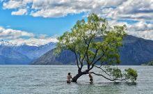 that-wanaka-tree