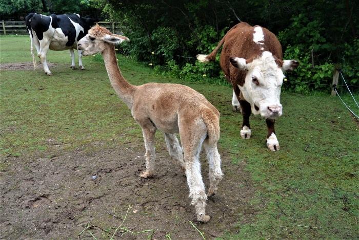 10 loomaaed (4)