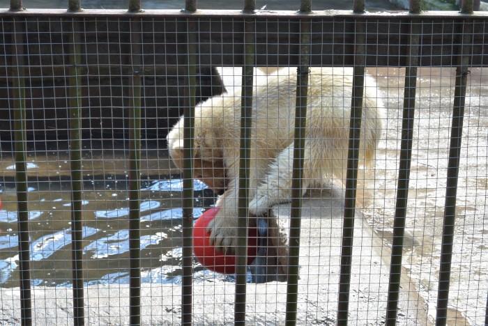 loomaaed (1)