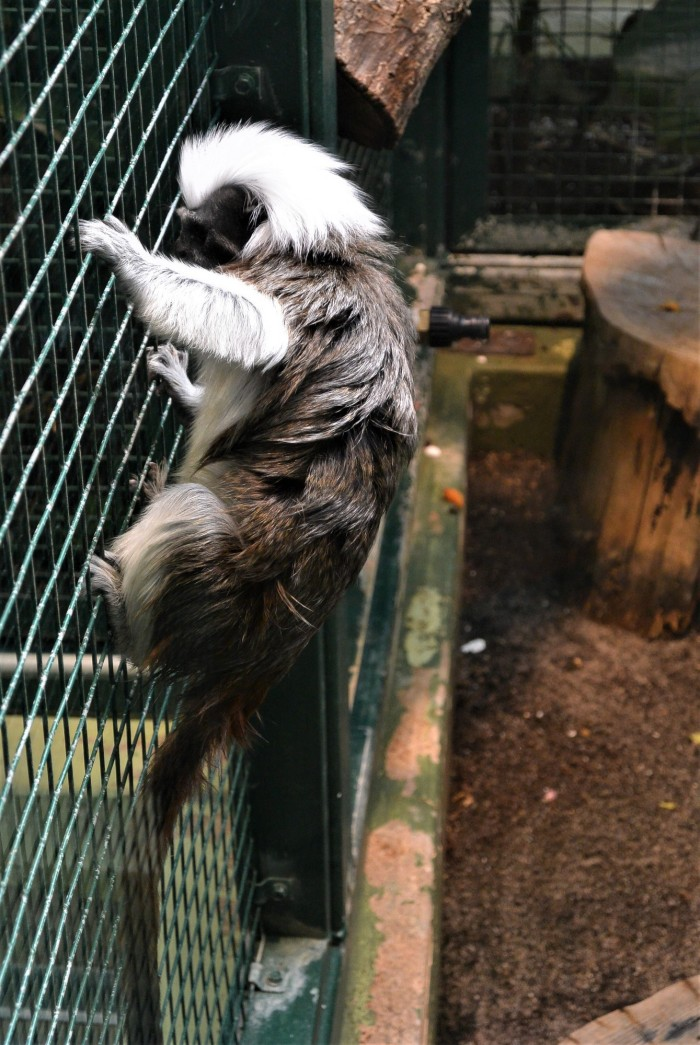 loomaaed (4)