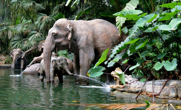 8 jungle cruise